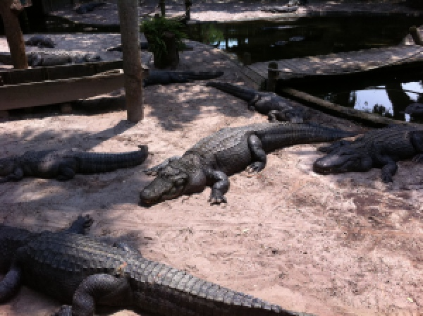 St. Augustine Alligator Farm florida family vacation
